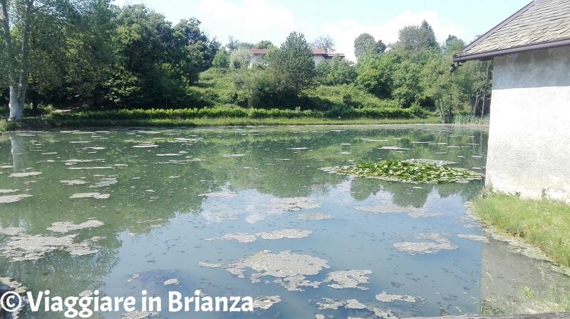 Laghi in Brianza, il laghetto di Cogoredo a Dolzago