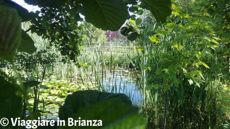 Laghi in Brianza, il laghetto di San Carlo a Seregno