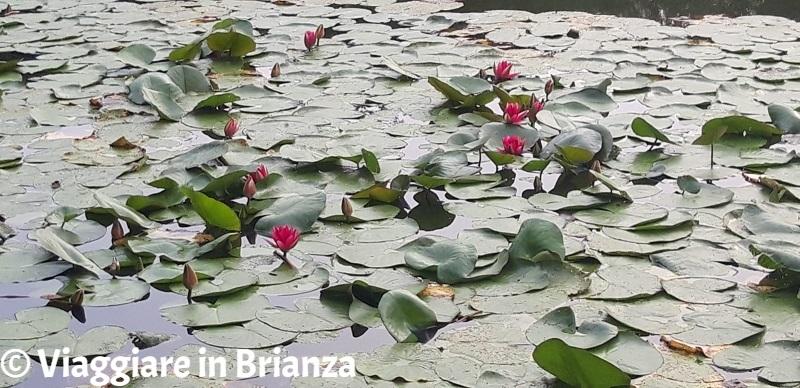 Cosa fare a Lentate sul Seveso, il Lago Azzurro e le ninfee