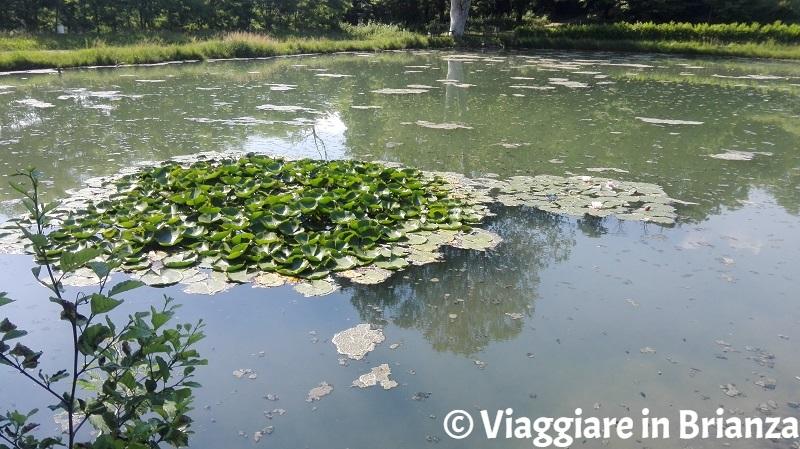 Cosa fare a Dolzago, il laghetto di Cogoredo