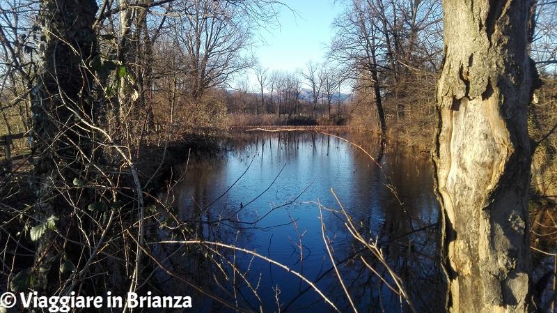 Parco della Brughiera Briantea, i laghetti della Mordina