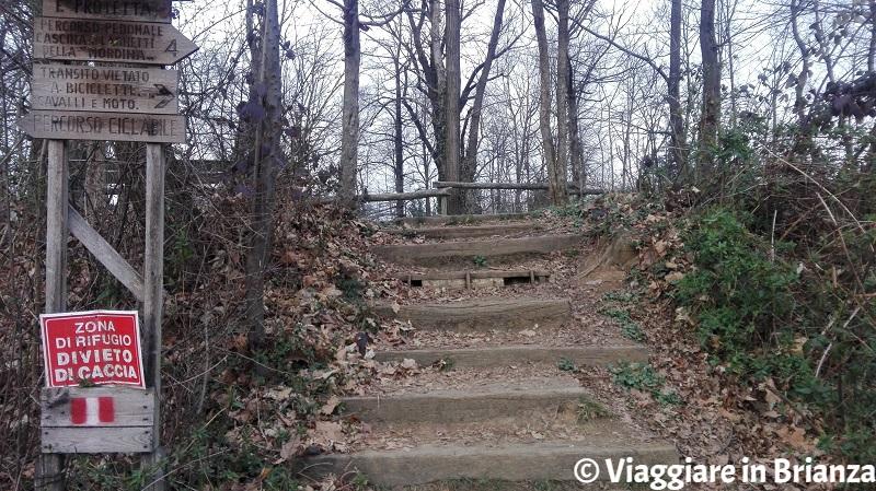 Parco della Brughiera Briantea, la scalina per i laghetti della Mordina