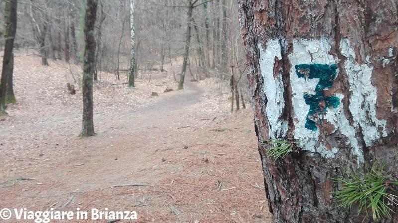 Parco della Brughiera Briantea, il sentiero 7 dalla Zoca dei Pirutit