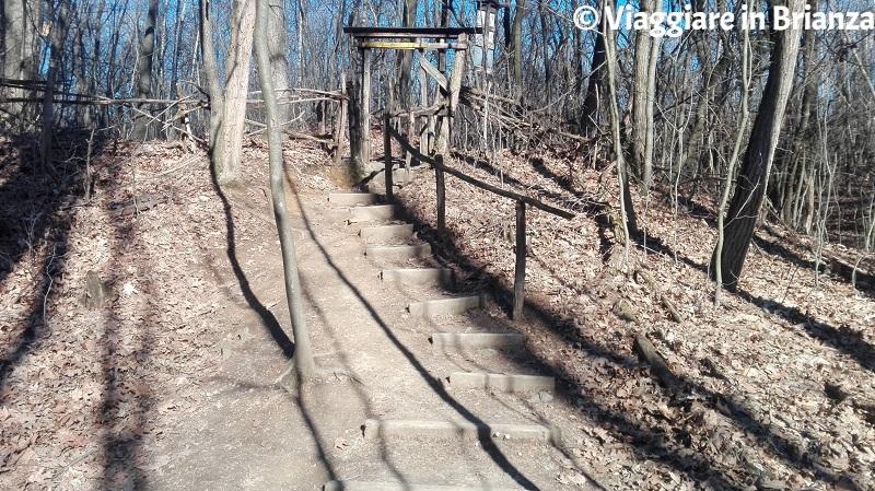 La scalinata del sentiero 4 del Parco della Brughiera Briantea