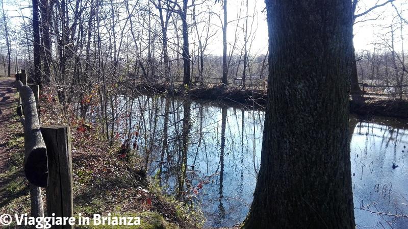 Sentiero 4 del Parco della Brughiera Briantea, il laghetto della Mordina