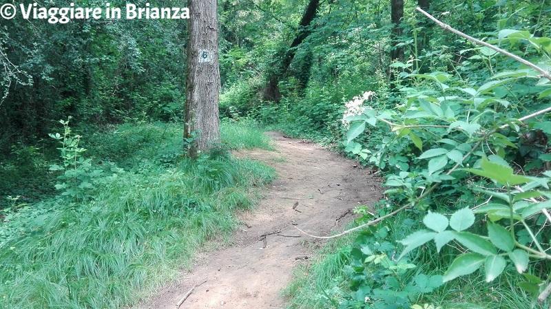 Alberi segnati sul sentiero 6 del Parco della Brughiera Briantea