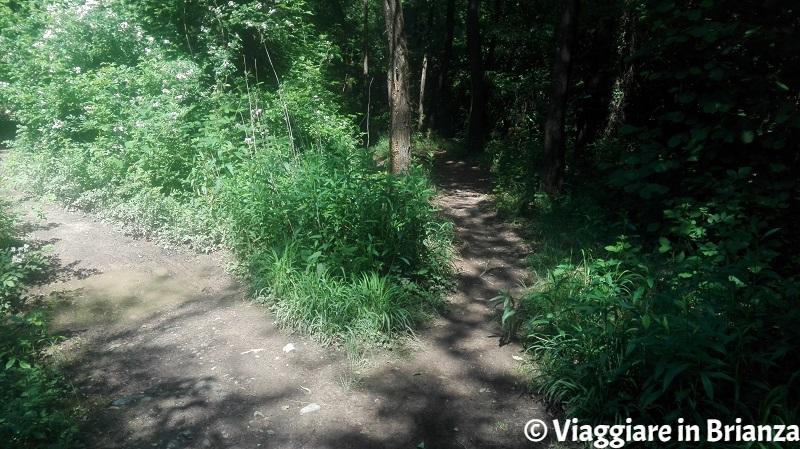 Le biforcazioni del sentiero 3 del Parco della Brughiera Briantea