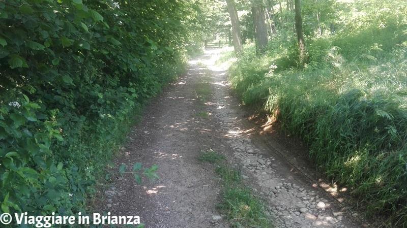 Il bivio verso destra sul sentiero 7 per Castel Marino