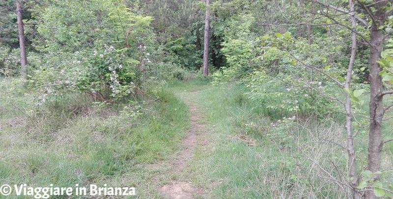 Bivio sul sentiero 6 del Parco della Brughiera Briantea
