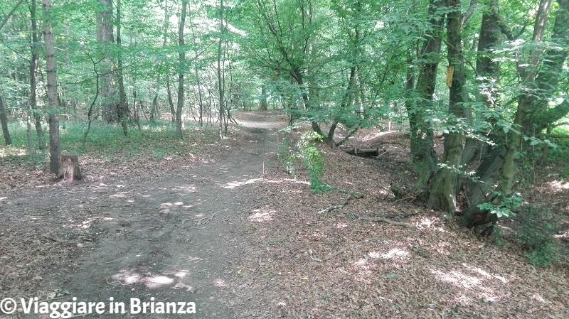 I boschi ex Roccolo del Porta nel Parco della Brughiera Briantea
