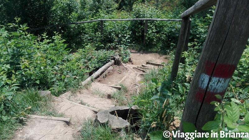 La discesa del sentiero 5 del Parco della Brughiera