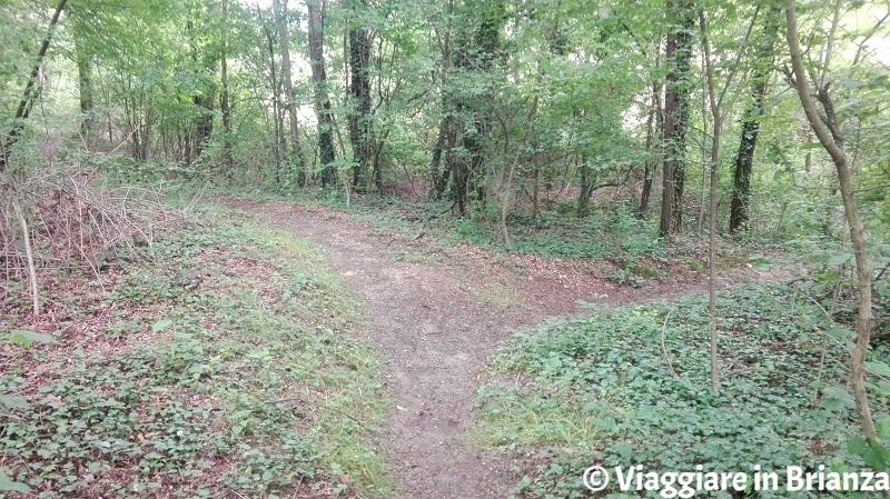 Intersezione del sentiero 6 del Parco della Brughiera Briantea