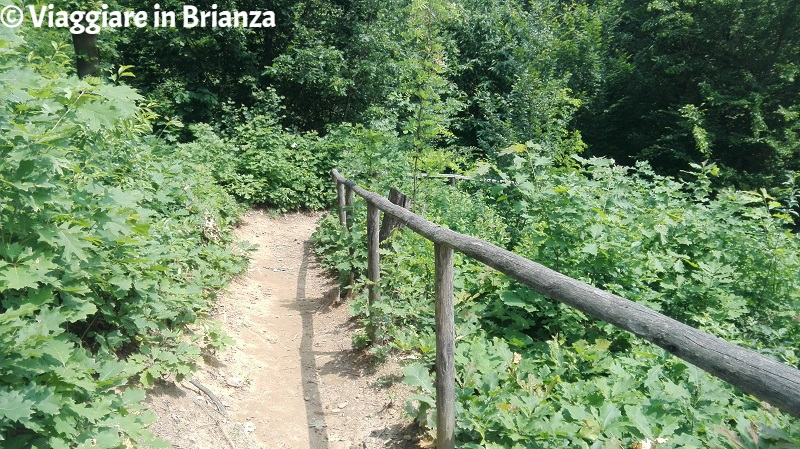 Parco della Brughiera Briantea, il sentiero 5