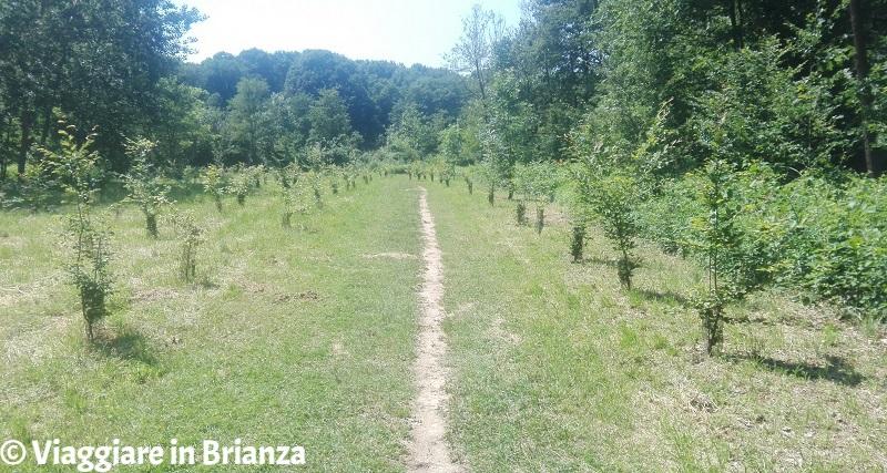 Prato della Contessa nel Parco della Brughiera Briantea