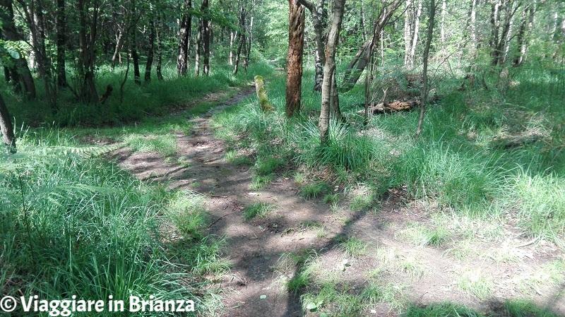Il quadrivio del sentiero 6 del Parco della Brughiera Briantea