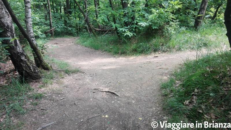 Sentiero 5 del Parco della Brughiera, bivio