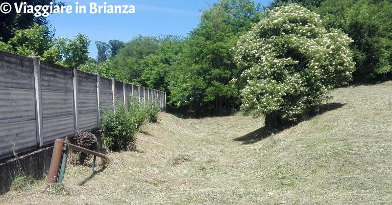 Il sentiero 5 del Parco della Brughiera Briantea: l'inizio