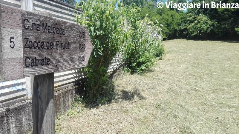Il sentiero 5 del Parco della Brughiera a Camnago