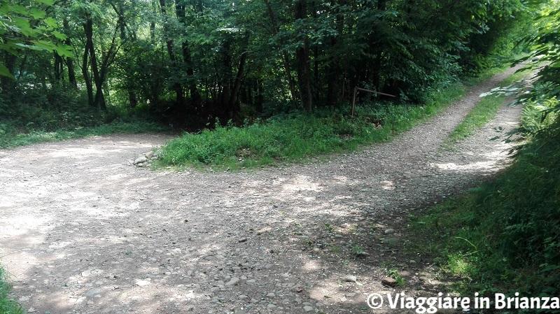 Il sentiero 5 del Parco della Brughiera in discesa