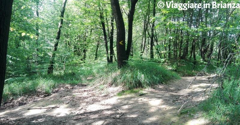 Sentiero 6 del Parco della Brughiera Briantea, Cascina Malpaga