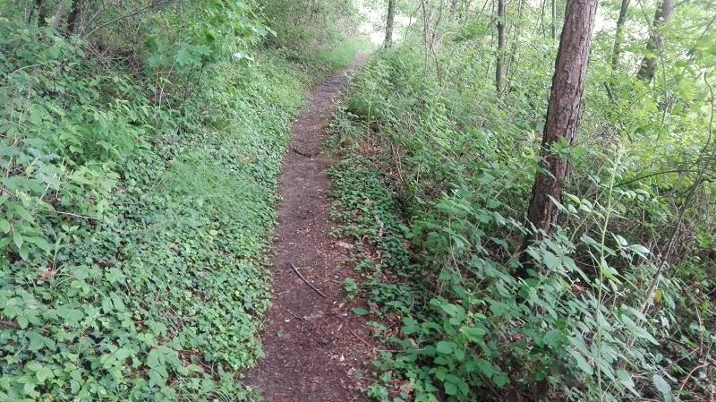 Sentiero 6 del Parco della Brughiera Briantea, la salita per la Zoca dei Pirutit