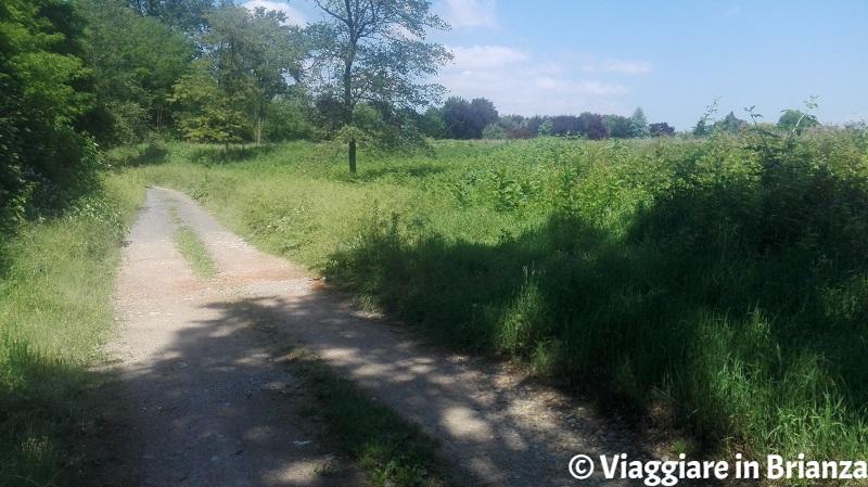 Il sentiero 7 per Castel Marino