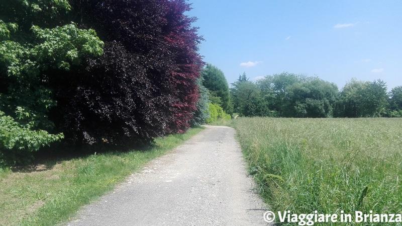Il sentiero per Castel Marino a Mariano Comense
