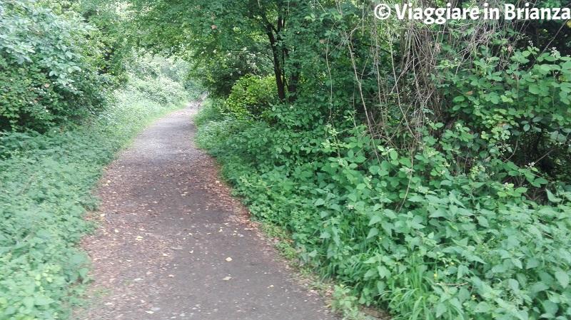 Il sentiero per la Zoca dei Pirutit