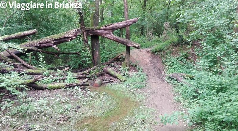 La strada per la Zoca dei Pirutit sul sentiero 6 del Parco della Brughiera Briantea