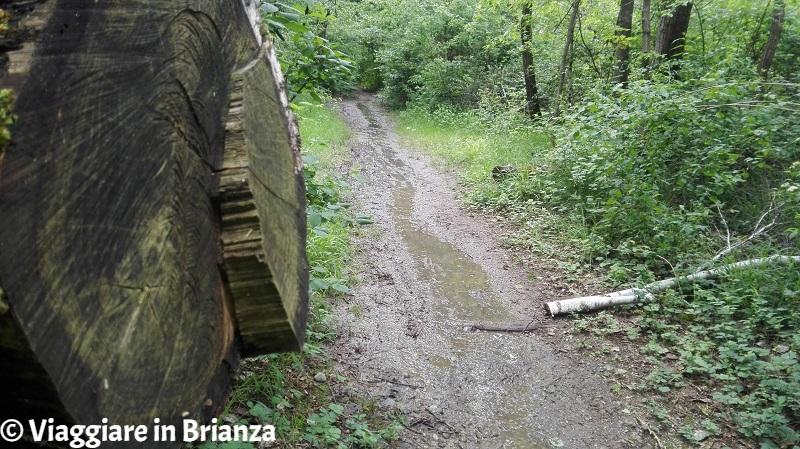 Il terreno argilloso del Parco della Brughiera Briantea