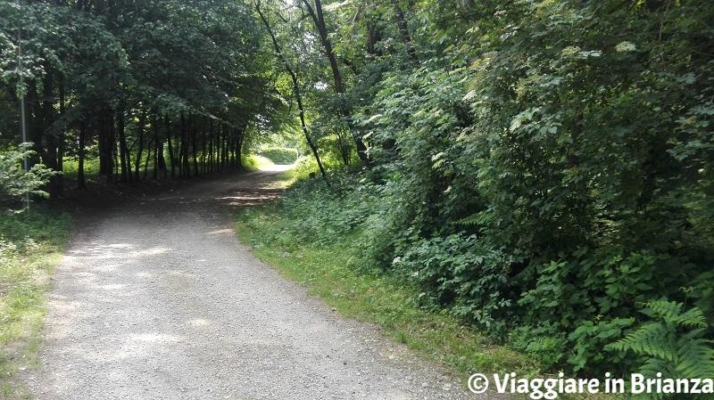 Ultima parte del sentiero 5 del Parco della Brughiera