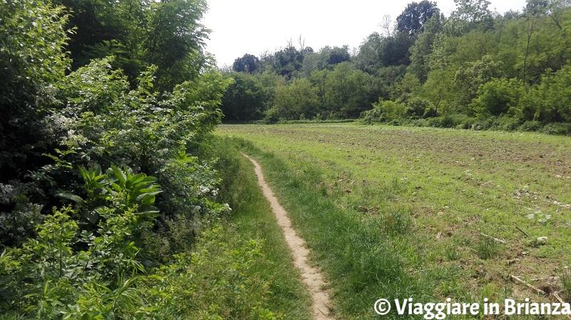 La valle del Terrò nel Parco della Brughiera Briantea