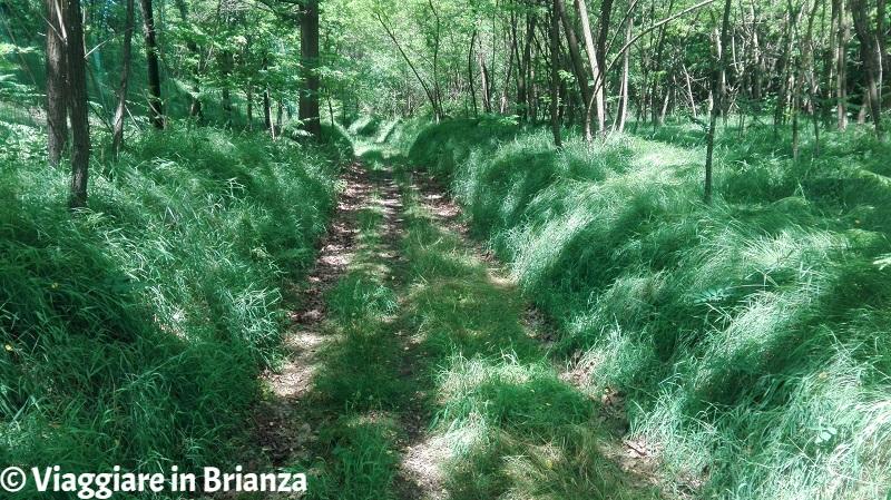 La vegetazione nel sentiero 5 del Parco della Brughiera