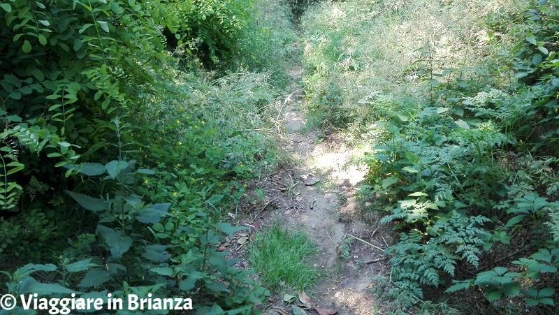 I boschi del Parco della Brughiera Briantea