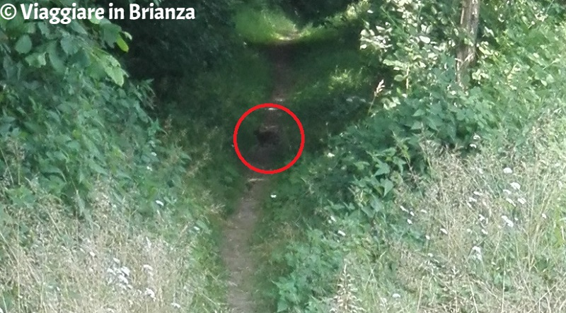 Parco della Brughiera Briantea, conigli