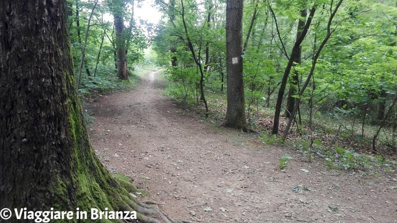Parco della Brughiera Briantea, il sentiero 1 per Cascina Imperatore