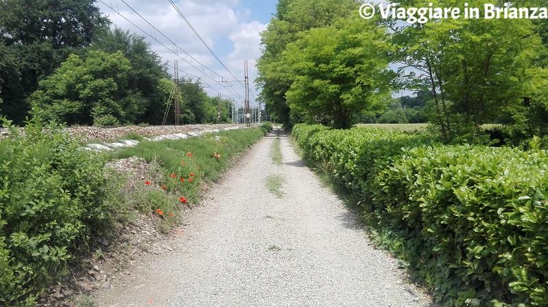 Parco della Brughiera Briantea, il sentiero 2