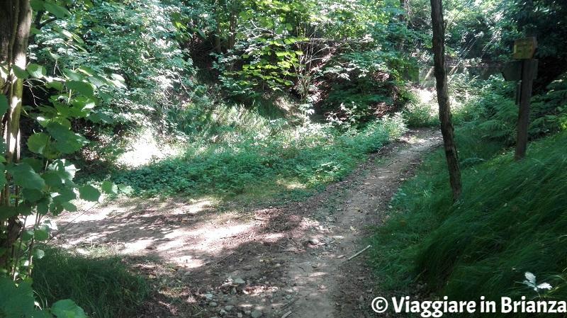 Parco della Brughiera, il sentiero 1