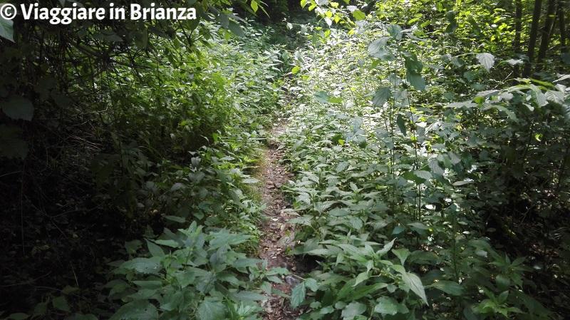 Parco della Brughiera Briantea, il sentiero 1 a Cimnago
