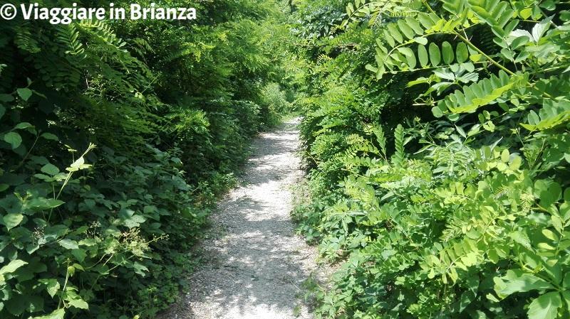 Parco della Brughiera, il sentiero 2