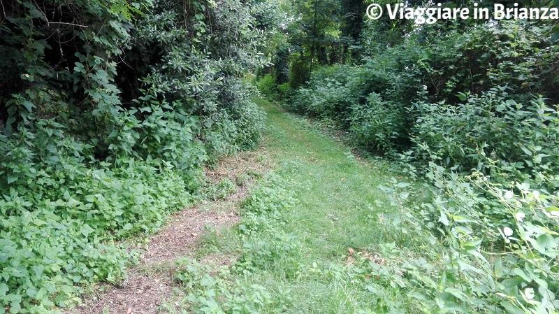 Parco delle Groane e della Brughiera Briantea, il sentiero 2
