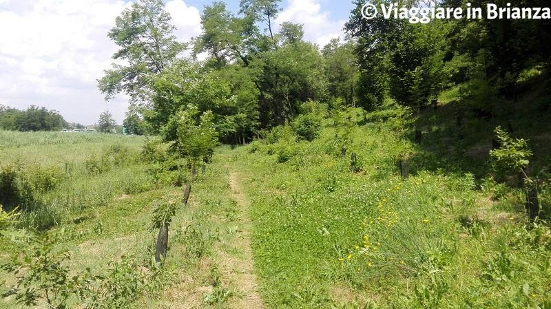 Parco delle Groane e della Brughiera, il sentiero 1