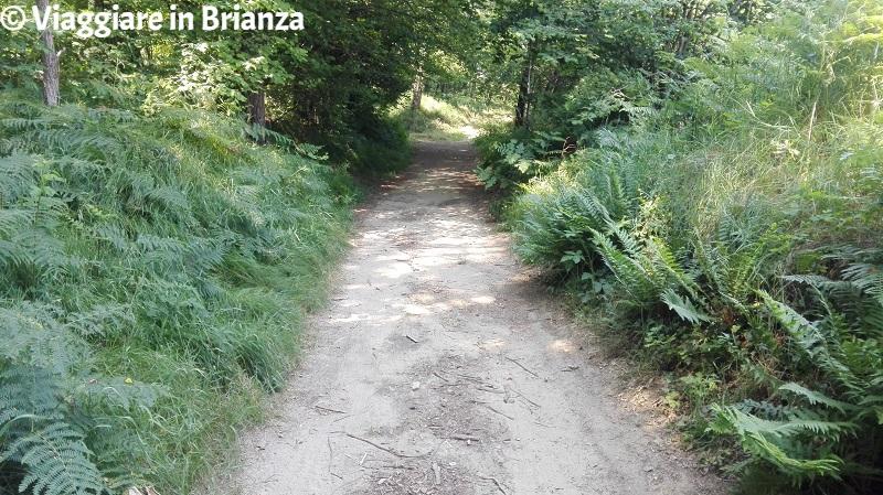 Il sentiero 1 del Parco della Brughiera Briantea