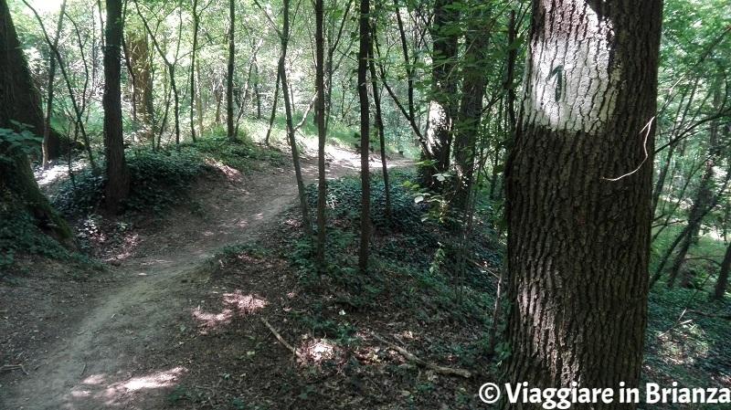 Il sentiero 1 del Parco della Brughiera a Copreno