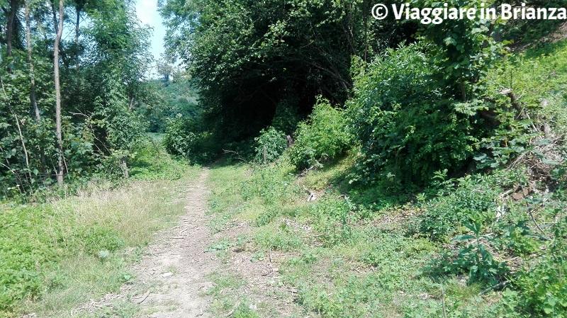 Il sentiero 1 del Parco della Brughiera a Lentate