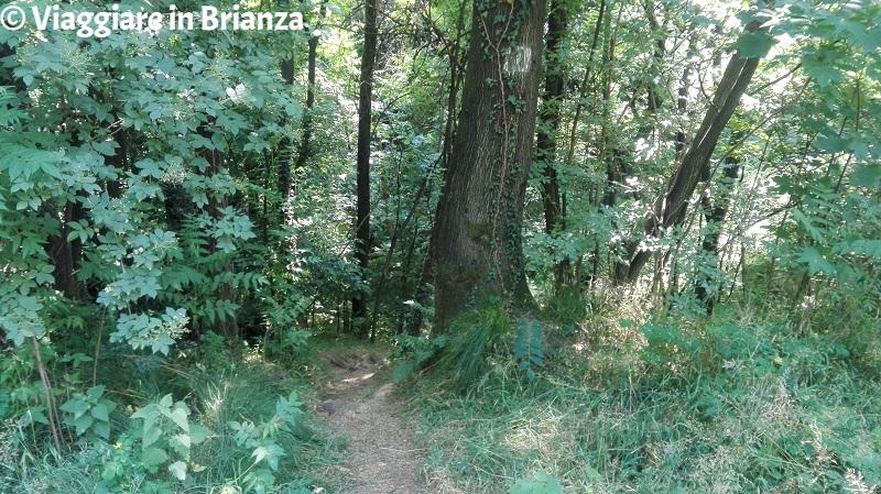 Il sentiero 1 del Parco della Brughiera nella Valle del Seveso a Lentate