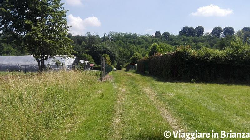 Il sentiero 1 del Parco della Brughiera
