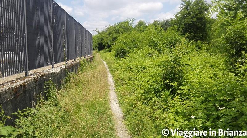 Il sentiero 2 del Parco della Brughiera Briantea a Carimate