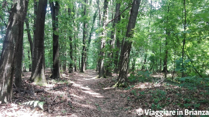 Sentiero 2 del Parco della Brughiera: Cascina Imperatore