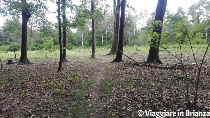 Il sentiero 2 del Parco delle Groane e della Brughiera Briantea a Lentate